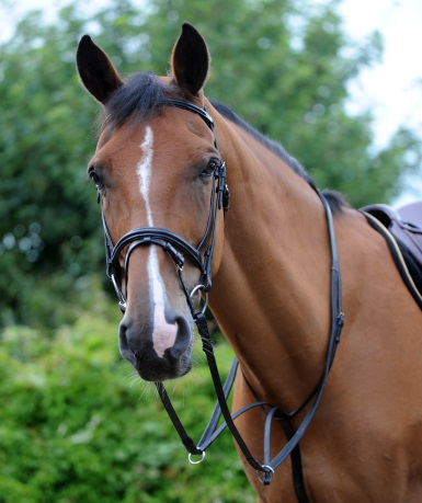Saddlery and leatherworks for your horse: what to look for