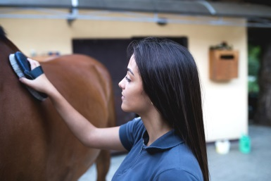 Top tips – teaching your horse some basic good manners