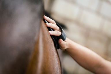 Horse care for complete beginners